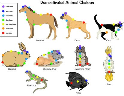 Chakra-em-animais2